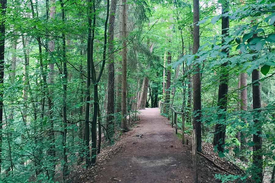 Aerosolen, Terpenen, Corona und Entspannung im Wald