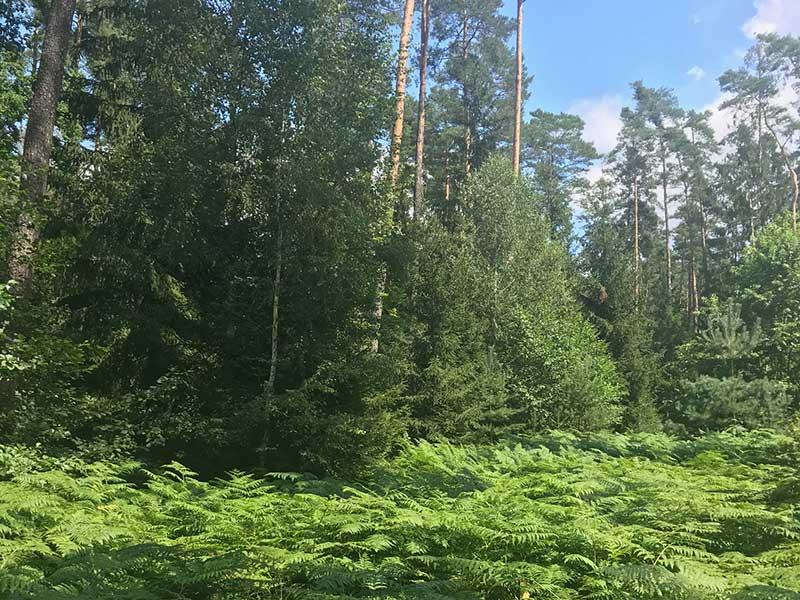Stressbewältigung durch Achtsamkeit im Wald